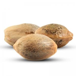 3 Ilmaisia kannabiksen siemeniä