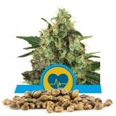 Medical Mass Bulk Seeds