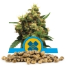 Painkiller XL Bulk Seeds