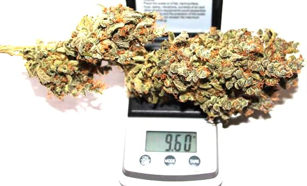 Royal Creamatic dried cannabis bud smoke report