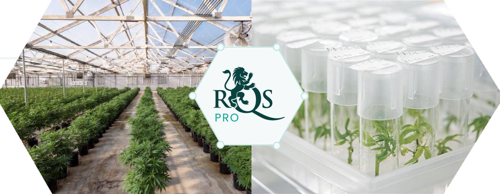 RQS Pro: kannabisalan innovaation ja kehityksen edelläkävijä
