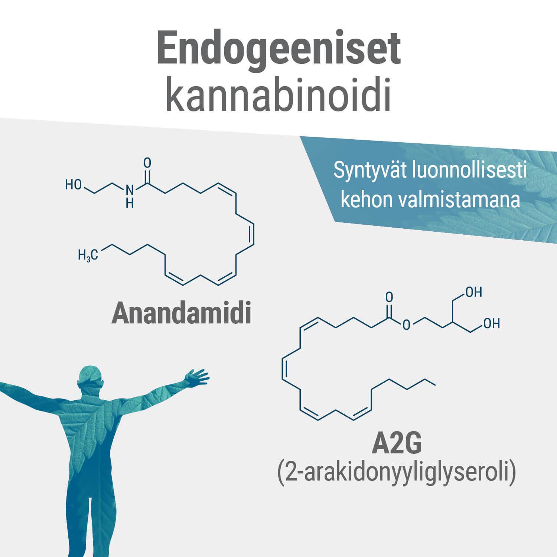 Endokannabinoidi