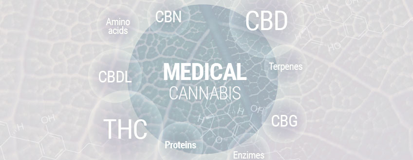 Medical Cannabis 101: The Complete Guide To Medical Marijuana