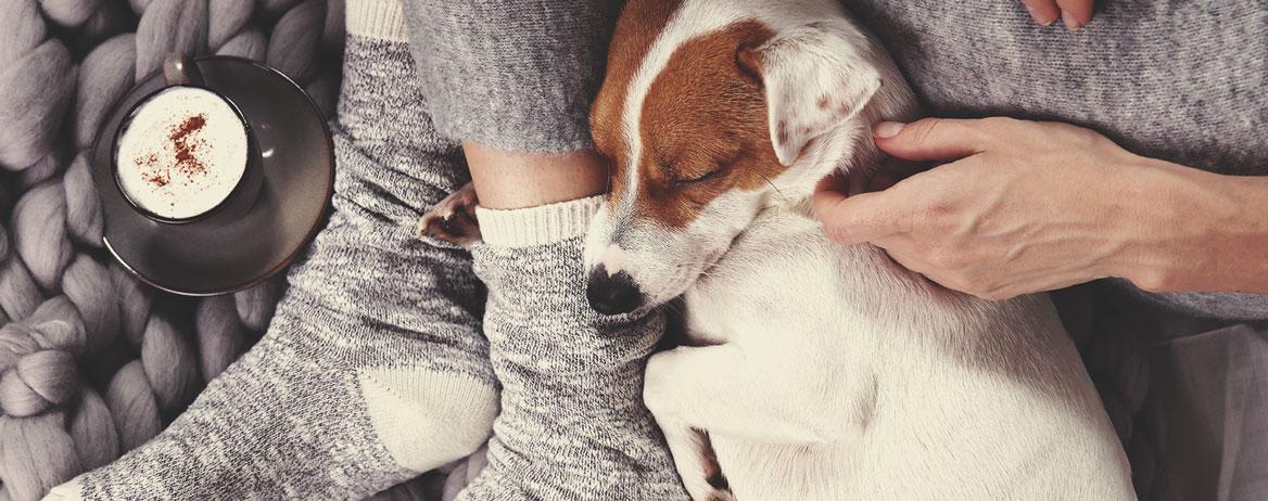 Mitä tehdä, jos koirani sai kannabista kehoonsa?
