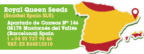 Royal Queen Seeds Spain