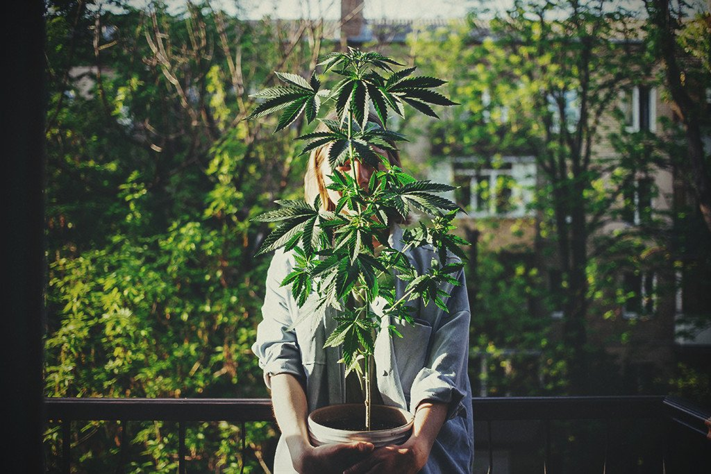 Marijuana strains women prefer