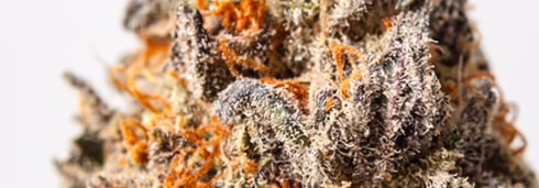 Strain Information: Hulkberry
